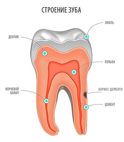 Строение зуба, рисунок